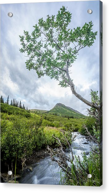Acrylic Print featuring the photograph Rainy Evening On A Mountain Stream by Tim Newton
