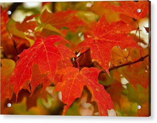 Ravishing Fall Acrylic Print