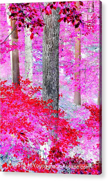 Red Forest Acrylic Print by JCYoung MacroXscape