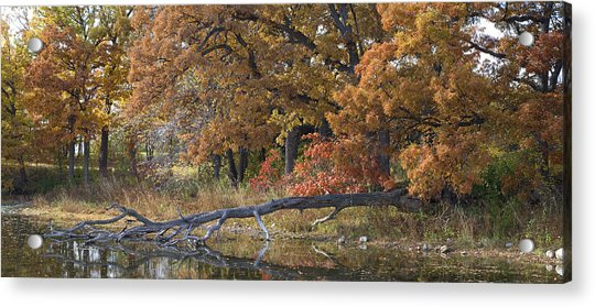 Red Oaks On The Shore Acrylic Print