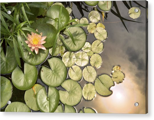 Acrylic Print featuring the photograph Reflected Light Upon Flowering Water Lilies by Jason Politte