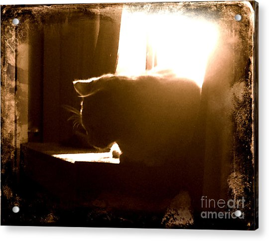 Rescue Cat Acrylic Print