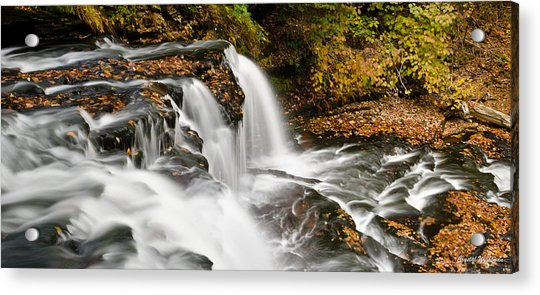 Ricketts Glen - On Top Of The Fall Acrylic Print