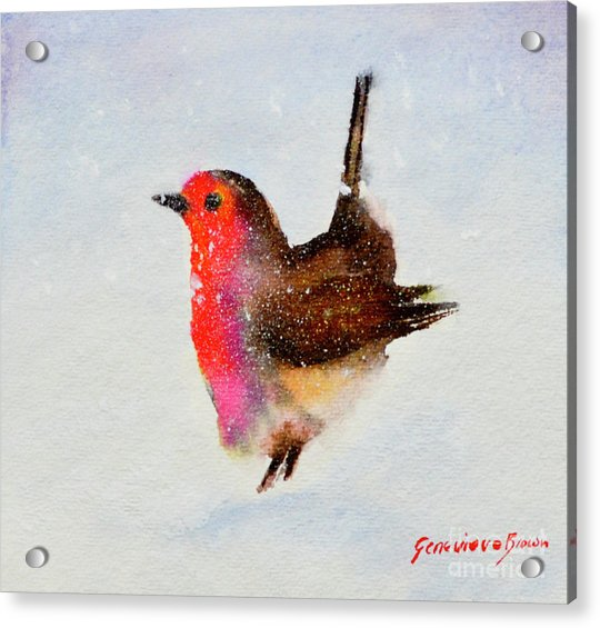 Robin Redbreast Acrylic Print