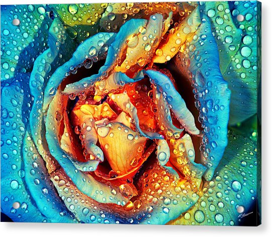 Rose Revisited Acrylic Print