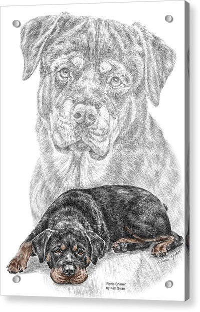 Rottie Charm - Rottweiler Dog Print With Color Acrylic Print