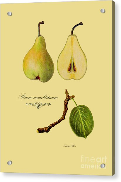 Russet Pear Acrylic Print
