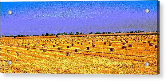 Sacramento Delta Farm Acrylic Print
