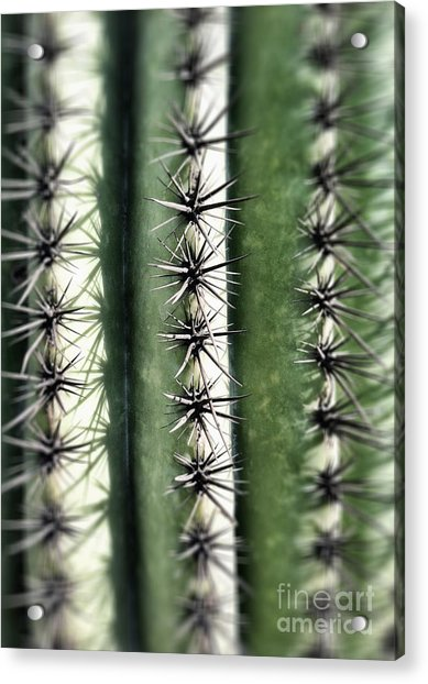 Saguaro Catus Needles Acrylic Print