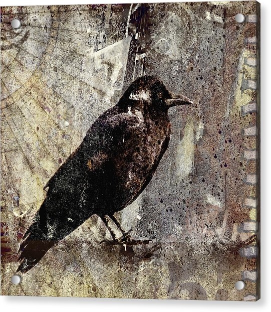 Same Crow Different Day Acrylic Print