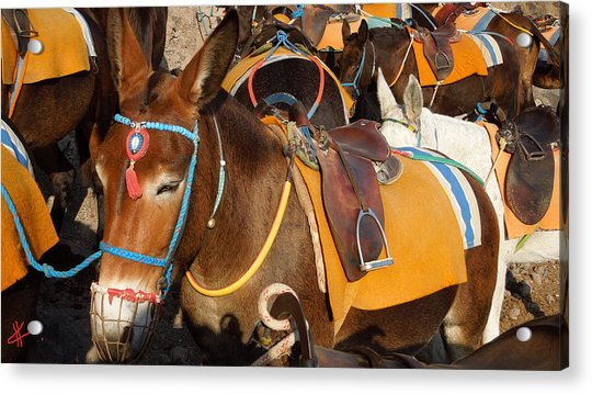 Acrylic Print featuring the photograph Santorini Donkeys Ready For Work by Colette V Hera  Guggenheim