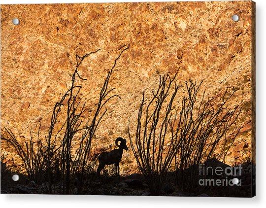 Silhouette Bighorn Sheep Acrylic Print