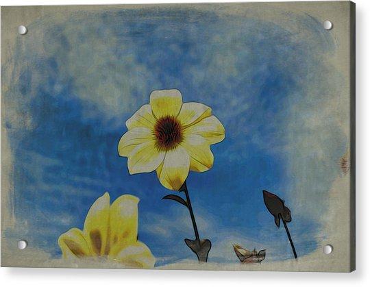 Sky Full Of Sunshine Acrylic Print