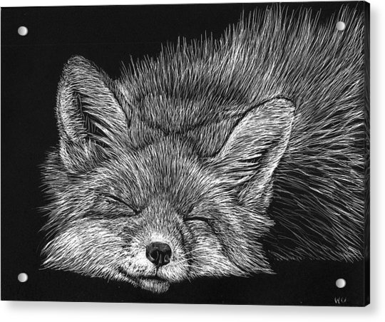 Sleeping Fox Acrylic Print