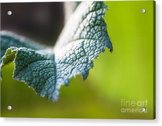 Slice Of Leaf Acrylic Print