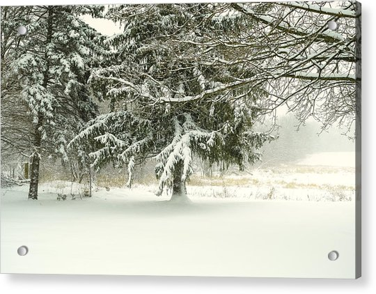 Snow-covered Trees Acrylic Print