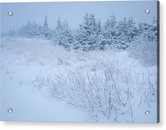 Acrylic Print featuring the photograph Snow On New Years Eve by Tim Newton
