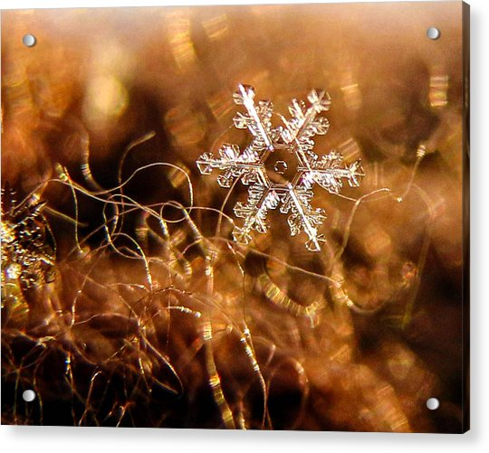 Snowflake On Brown Acrylic Print