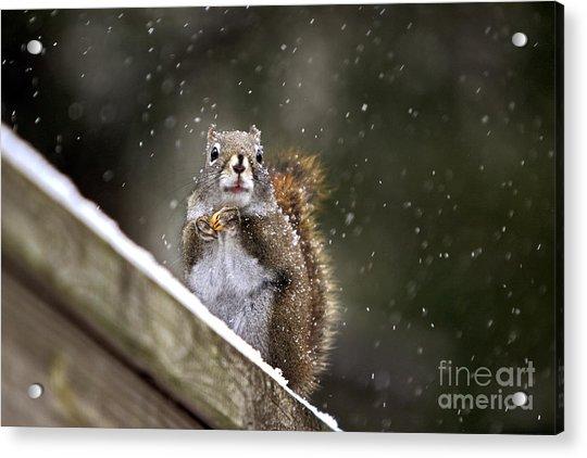 Snowflake Squirrel Acrylic Print
