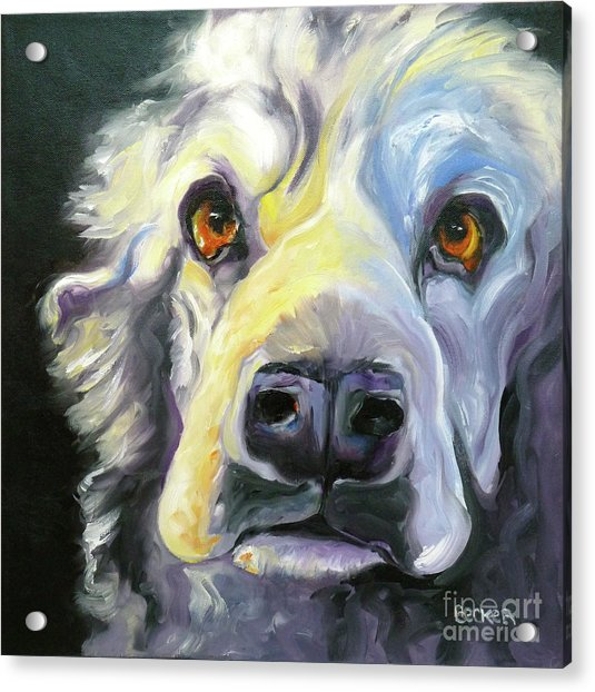 Spaniel In Thought Acrylic Print