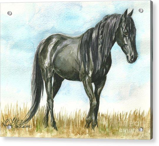 Spirit Wild Horse In Sanctuary Acrylic Print