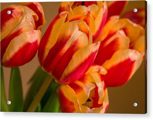 Spring Indoors Acrylic Print