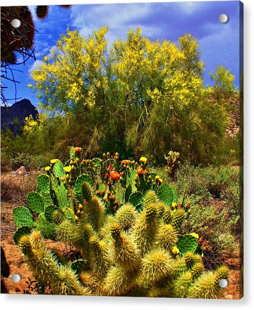 Spring On The Desert Acrylic Print