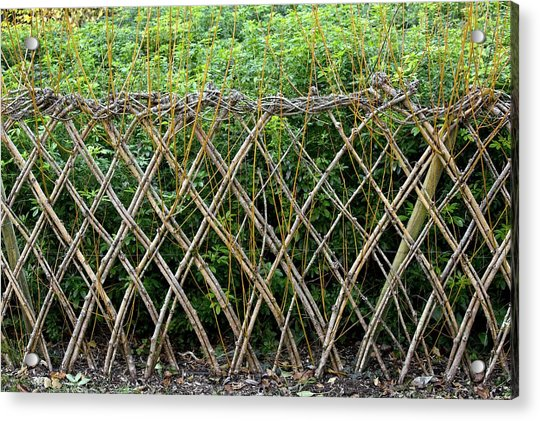 Sprouting Willow Fence Acrylic Print by Bob Gibbons