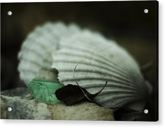 Still Life With Fossil Shells And Beach Glass Acrylic Print
