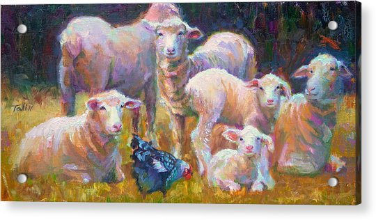 Acrylic Print featuring the painting Stranger At The Well - Spring Lambs Sheep And Hen by Talya Johnson