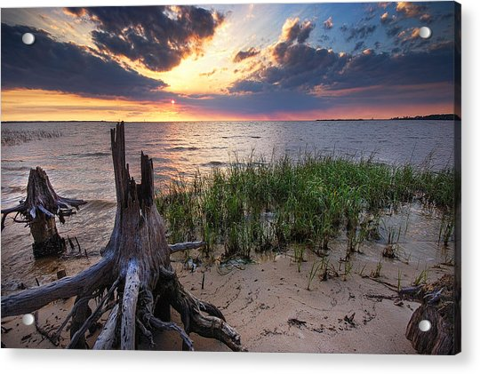 Stumps And Sunset On Oyster Bay Acrylic Print