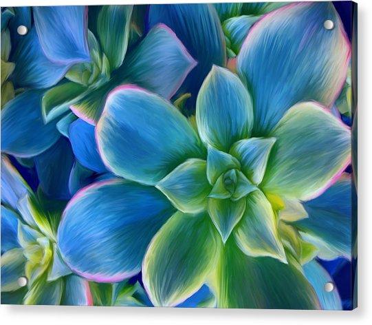 Succulent Blue On Green Acrylic Print