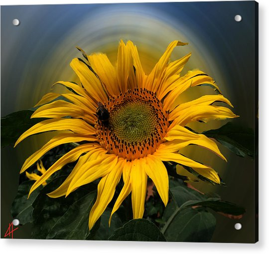 Acrylic Print featuring the photograph Sun Flower Summer 2014 by Colette V Hera  Guggenheim