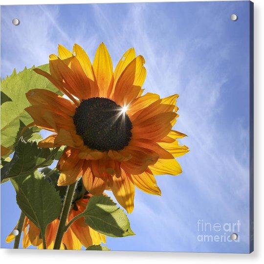 Sun Sparkle Acrylic Print
