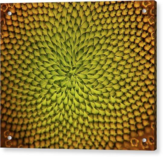 Sunflower Sundial Acrylic Print