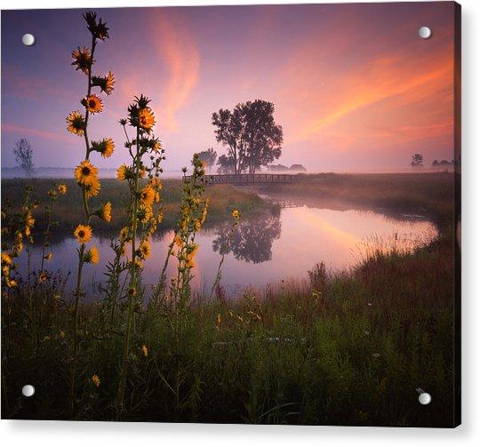 Sunflower Sunrise Acrylic Print