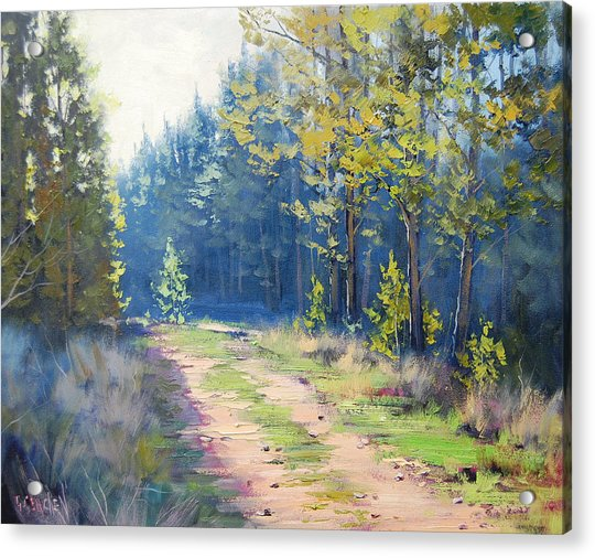 Sunny Corner Pine Forest Acrylic Print