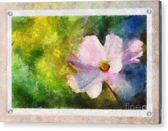 Sunny Pink Cosmos Acrylic Print