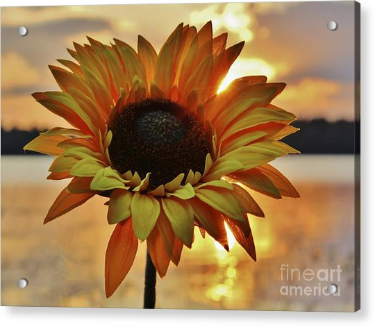 Sunset Flower Acrylic Print