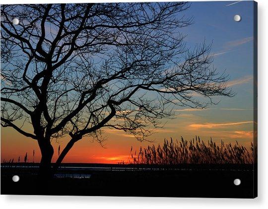 Sunset Tree In Ocean City Md Acrylic Print