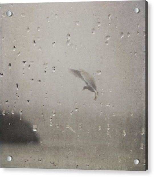 Acrylic Print featuring the photograph Suspended by Sally Banfill