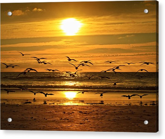 Take Flight At Sunset Acrylic Print by Donna Pagakis