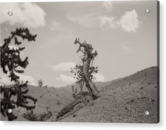 Talking Trees In Bryce Canyon Acrylic Print
