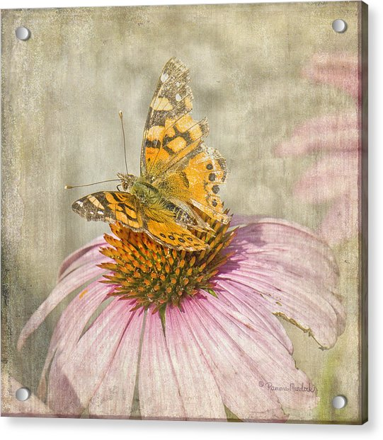 Tattered Butterfly Acrylic Print