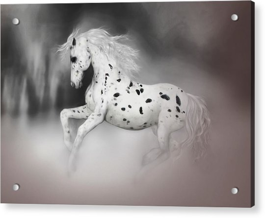 Acrylic Print featuring the painting The Appaloosa by Valerie Anne Kelly