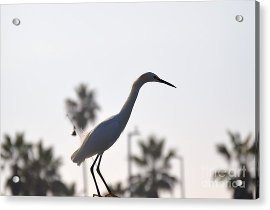 Acrylic Print featuring the photograph The Art Of Fishing by Laurie Lundquist
