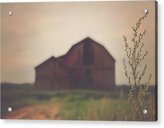 The Barn Daylight Version Acrylic Print