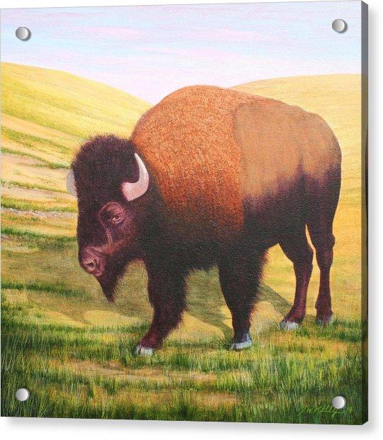 The Buffalo Acrylic Print by J W Kelly