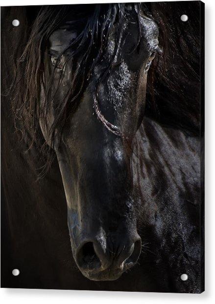 The Dark Horse Acrylic Print