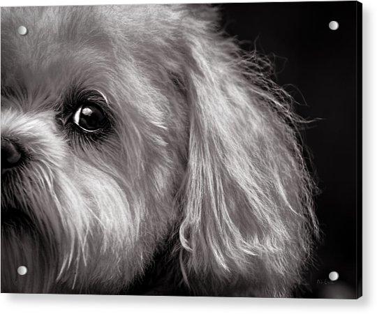 The Dog Next Door Acrylic Print